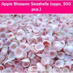 Apple Blossom Seashells (appx. 500 pcs.)
